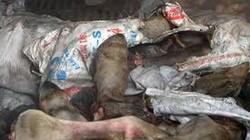 Bình Dương: Phát hiện 20 tấn chân trâu, bò thối