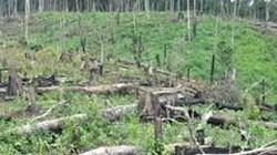 Bình Định: Rừng đầu nguồn bị chặt phá