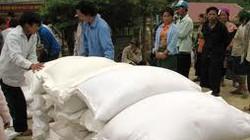 Thanh Hóa: Hỗ trợ gạo cho người trồng rừng