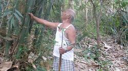 Người đi về phía rừng