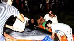 Cận cảnh hàng trăm người giải cứu cá voi khủng tại đảo Cô Tô