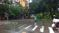 """Hà Nội mưa và """"điệp khúc""""... đường ngập, cây đổ"""