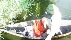 Cá chết hàng loạt vì nước thải nhà máy
