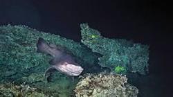 Việt Nam có 814 loài hải sản tầng đáy