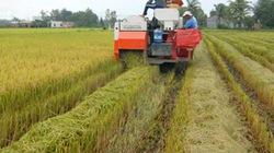 Triển khai cánh đồng mẫu lớn, cánh đồng liên kết: Nông dân mê, doanh  nghiệp ngại