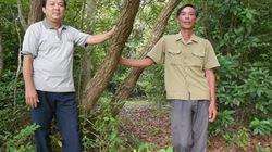 Hợp tác xã giữ rừng