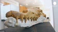 """SỐC: Phát hiện hóa thạch cá voi """"đi bộ"""" siêu cổ"""