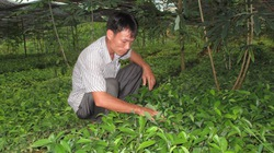 Phú Thọ: Nhiều hoạt động hỗ trợ nông dân