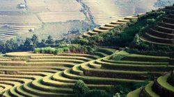 Mù Cang Chải: Danh thắng Quốc gia Ruộng bậc thang