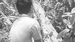 Làng quê náo động vì ươi rừng: Tiếng kêu cứu của rừng