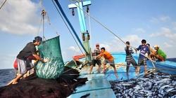 Đà Nẵng: Thành lập Chi hội Khai thác hải sản xa bờ