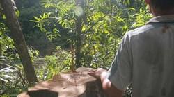 Phú Yên: Nghiêm cấm chặt hạ cây ươi