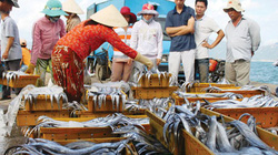 Quảng Nam: Nhân rộng tổ đoàn kết đánh bắt hải sản