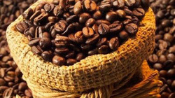 """Lâm Đồng: Có thêm nhãn hiệu """"Cà phê Arabica Lang Biang"""""""