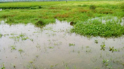 Hà Nội: Công bố kết quả thanh tra, kiểm tra đất nông nghiệp vào ngày 1.8