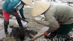 Cận cảnh bãi Đai giàu nguồn lợi hải sản vừa bị đổ thuốc độc