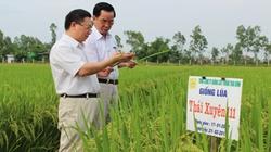 Bón phân đa yếu tố NPK Văn Điển cho lúa mùa ở Thái Bình