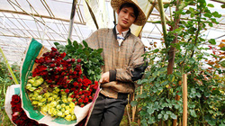 Du lịch tới 3 làng hoa nổi tiếng ở Đà Lạt