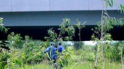 TP.HCM: Phát hiện xác người chết khô dưới gầm cầu