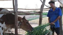 Sóc Trăng: Người Khmer thoát nghèo từ vốn 135