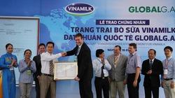 Việt Nam có trang trại bò tiêu chuẩn Global G.A.P. đầu tiên tại Đông Nam Á