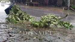 Huyện Hải Hà, Quảng Ninh: Gió đang rít, quật đổ nhiều cây, cuốn phăng mái nhà