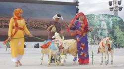 Ninh Thuận: 25 chú cừu từ đàn cừu gần 100 nghìn con thi khỏe, thi đẹp