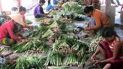 Trồng sả lãi gấp 3 trồng lúa