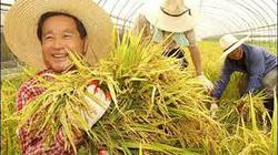 Kiến nghị áp dụng mô hình nông nghiệp của Hàn Quốc