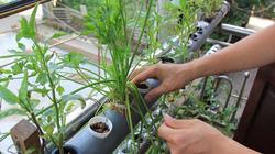 """Vườn treo di động 2 mét vuông đủ rau cho cả nhà của anh """"nông dân"""" Hà Nội"""