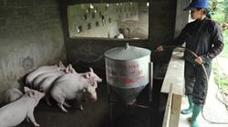 Cách phòng, chống bệnh dịch  tả lợn