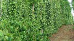Tập trung phát triển nông nghiệp công nghệ cao tại Tây Nguyên