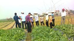 Tập huấn tại hiện trường cho nông dân: Dân nhớ lâu, ứng dụng tốt