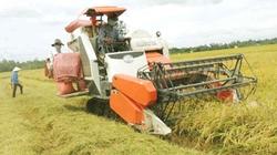 Thu hoạch lúa hè thu ở ĐBSCL: Giá lúa tăng chậm, chi phí tăng nhanh