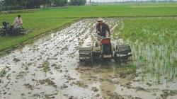 Thúc đẩy vùng lúa hàng hóa chất lượng cao