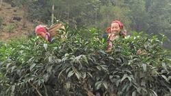 Tiêu thụ nông sản miền núi: Đầu vào hanh thông, đầu ra bịt kín