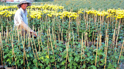 Tái cơ cấu nông nghiệp nhìn từ Đồng Tháp: Hợp tác, liên kết và thị trường