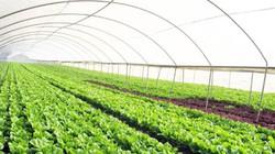 Thành lập khu nông nghiệp công nghệ cao 300ha tại Lào Cai