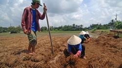 Quyết liệt tái cơ cấu nông nghiệp