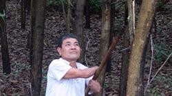 Trồng 20ha rừng  bằng... cùi tay