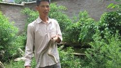 """Quỹ hỗ trợ nông dân giúp người nuôi rắn """"bỏ túi"""" 70 triệu đồng mỗi năm"""