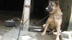 Quảng Nam: Vác súng, cưỡi xe phân khối lớn đi... trộm chó