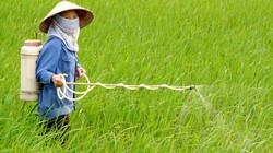 Hướng dẫn cách phun thuốc phòng trừ sâu bệnh