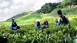 Khai thác nông sản vùng biên giới