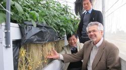 Nông nghiệp công nghệ cao vướng rào cản: Nút thắt từ vốn vay