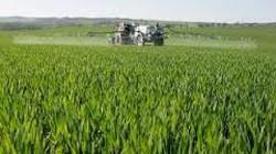 Bình Định: 3 giống lúa mới cho năng suất cao