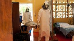 Huyết thanh kháng Ebola: Không dễ sản xuất đại trà