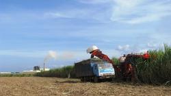 Tín hiệu vui: Khi đại gia làm nông nghiệp công nghệ cao