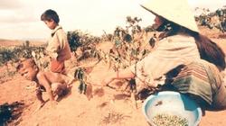 Agribank giúp Tây Nguyên giảm nghèo