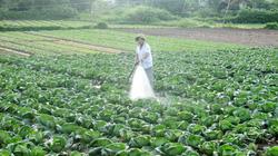 Thuốc bảo vệ thực vật: Nguy cơ phụ thuộc vào Trung Quốc là rất lớn